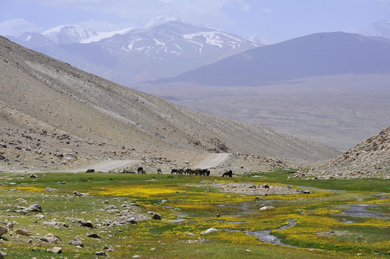 パミール高原縦断 山と花と人と ...