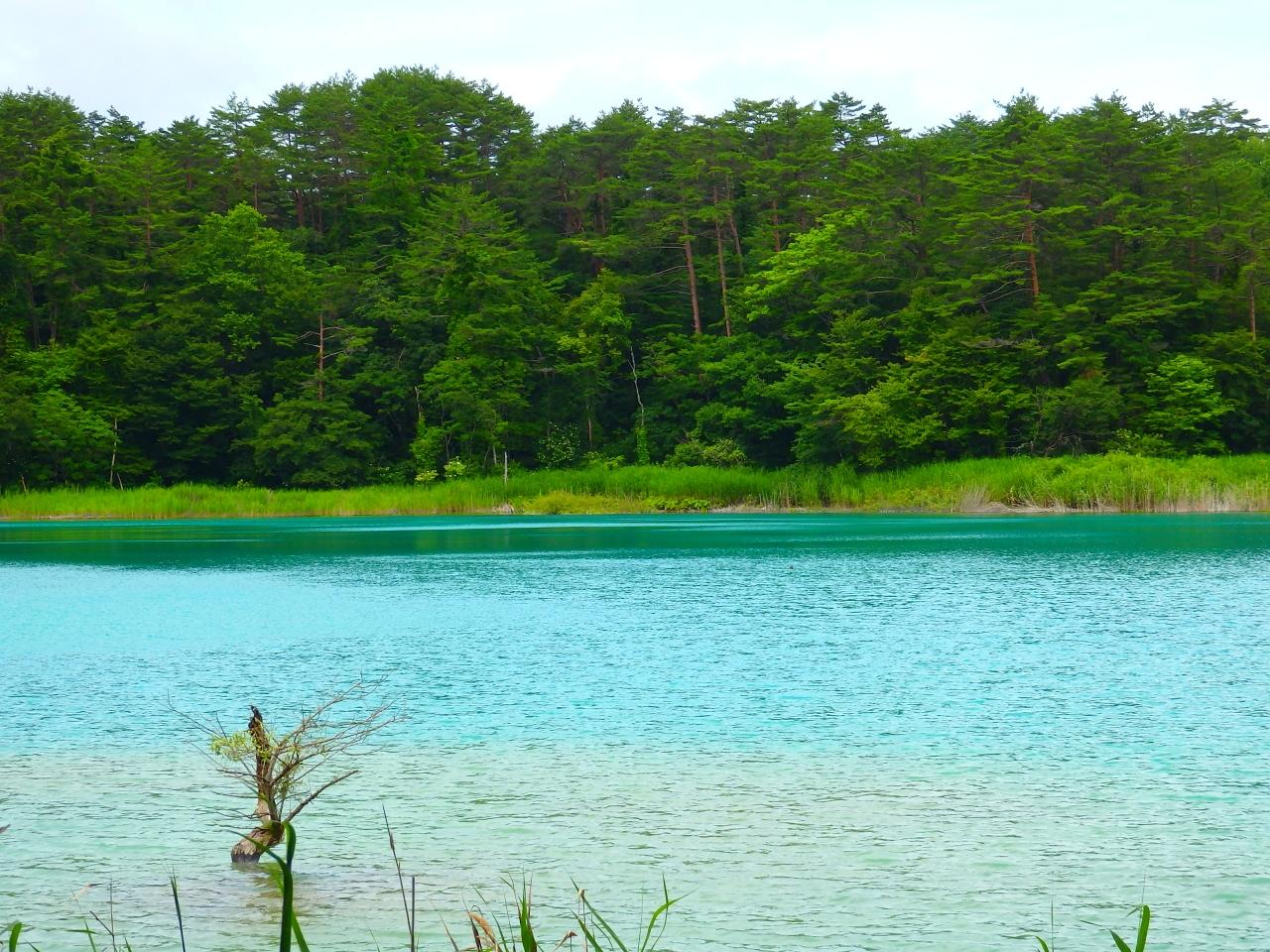 「五色沼」的圖片搜尋結果