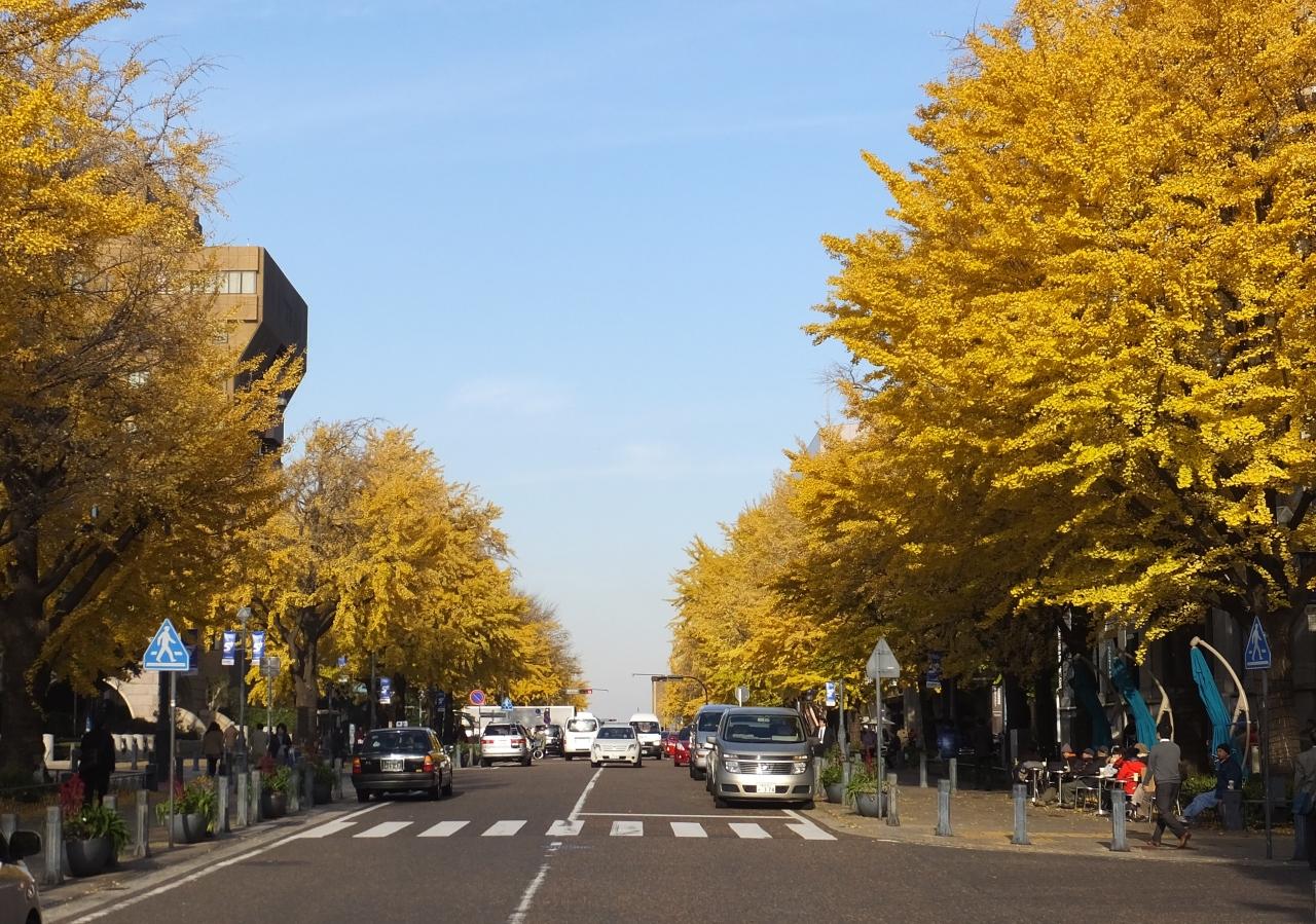 横浜の紅葉スポット山下公園通り...