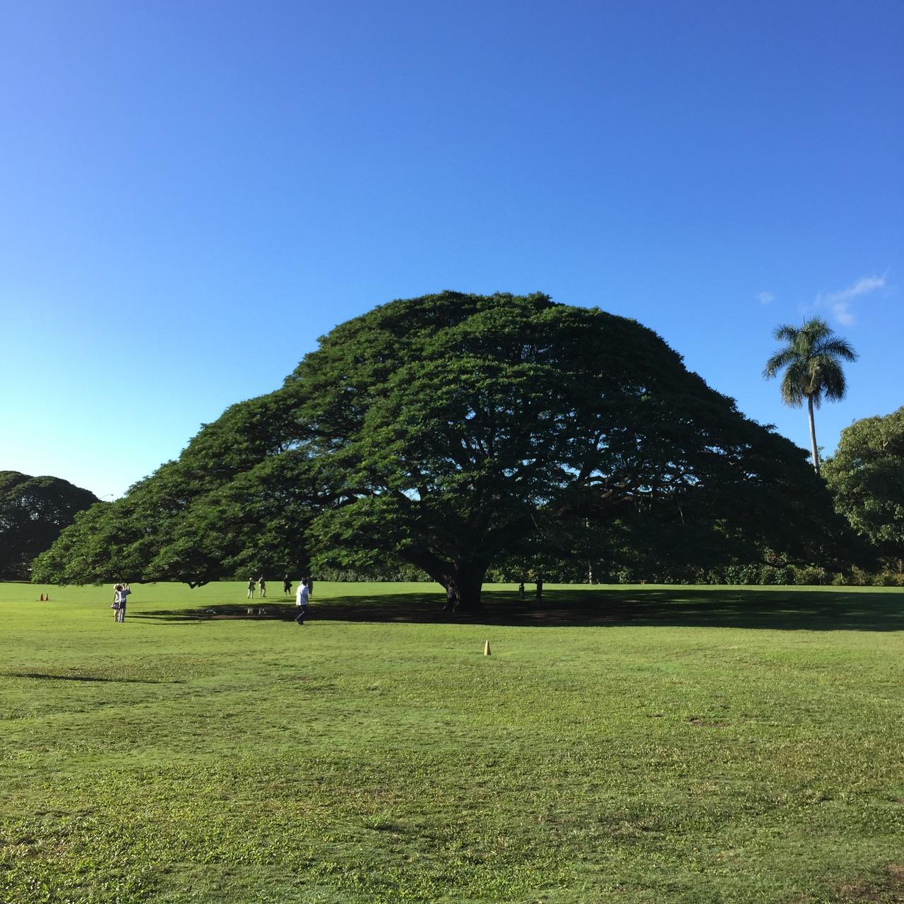 ハワイ ジュラシック パーク