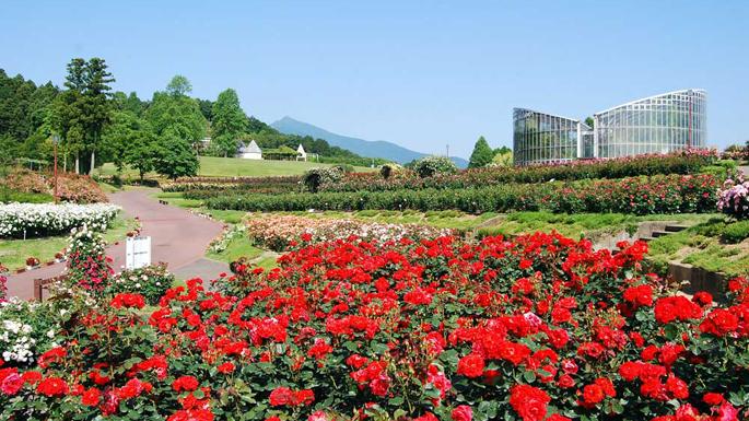 茨城県フラワーパーク』石岡・霞ヶ浦(茨城県)の旅行記・ブログ by おがけん@GCRさん【フォートラベル】