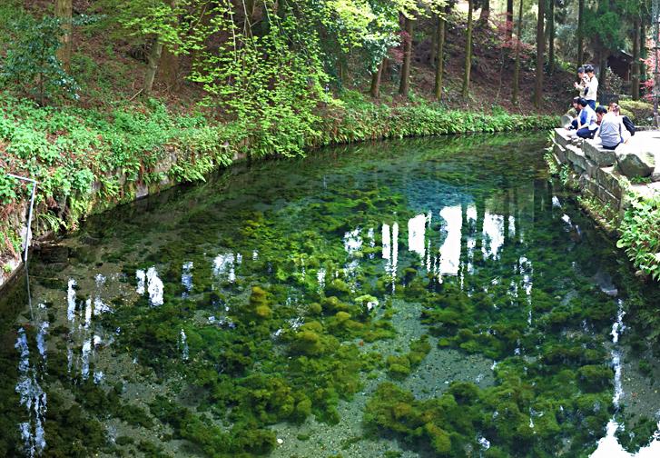 熊本 白川 水源