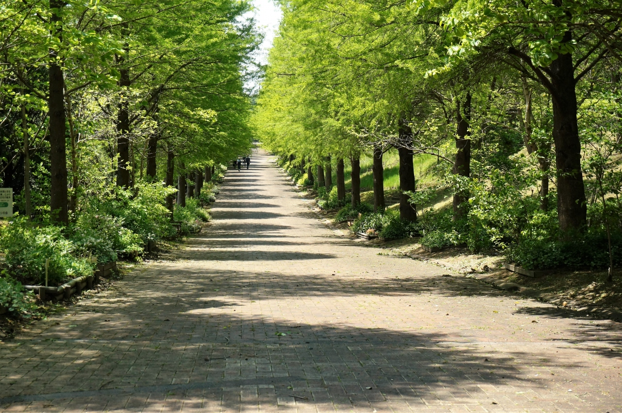 公園 播磨 中央