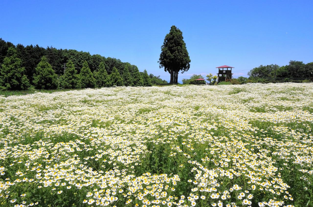 青山 リゾート メナード