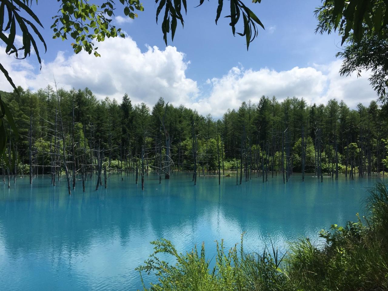 再訪 パワースポット 美し過ぎた青い池と美瑛神社とポケモンgo 美瑛