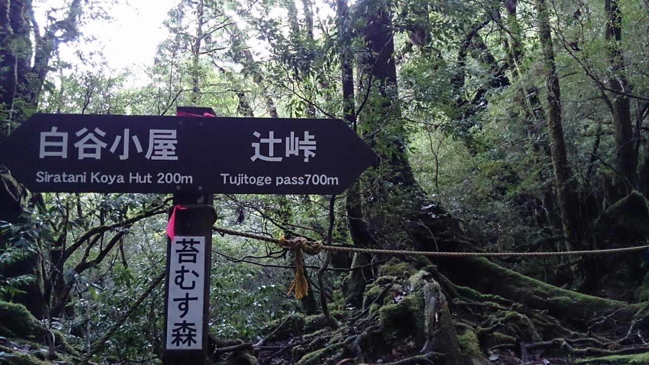 屋久島で山と川を楽しむ』屋久島...
