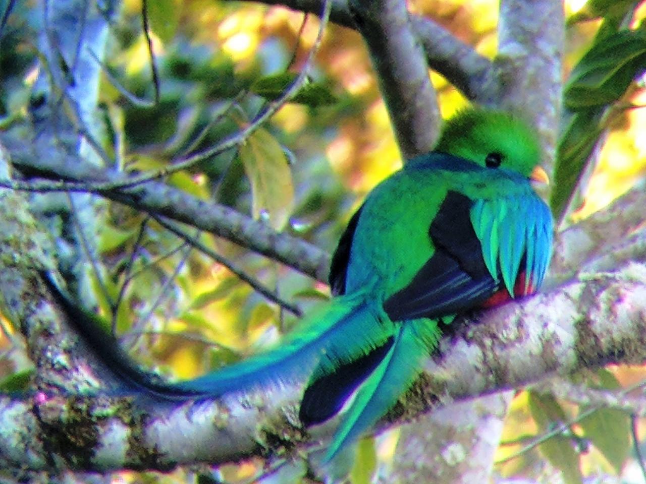 幸せの鳥、ケツァールを探しに。』その他の都市(コスタリカ)の