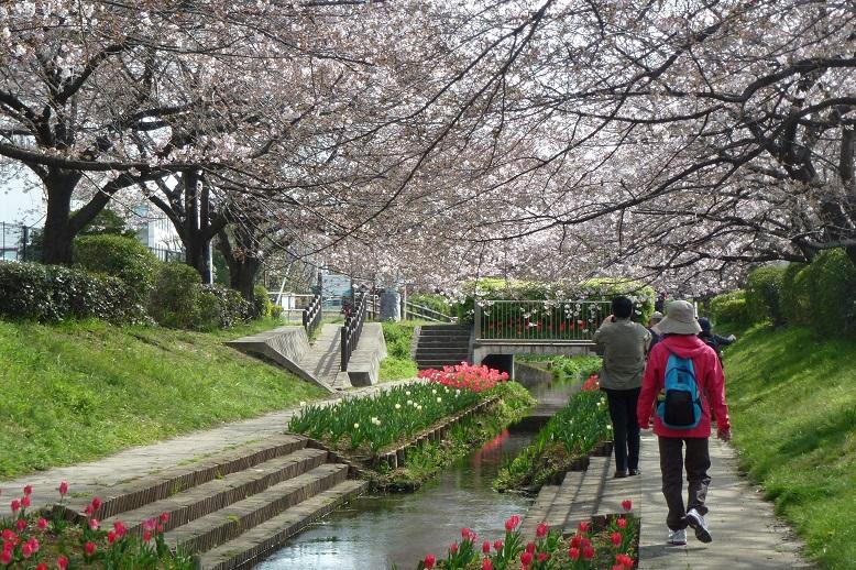 『横浜市都筑区水と緑の散策マップ「M折本農地から江川 ...