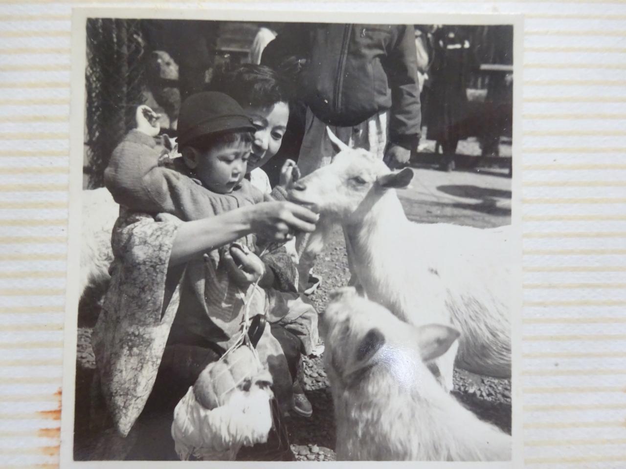 1956年(昭和31年)10月 初めての上野動物園(その後、何回も上野動物園 ...
