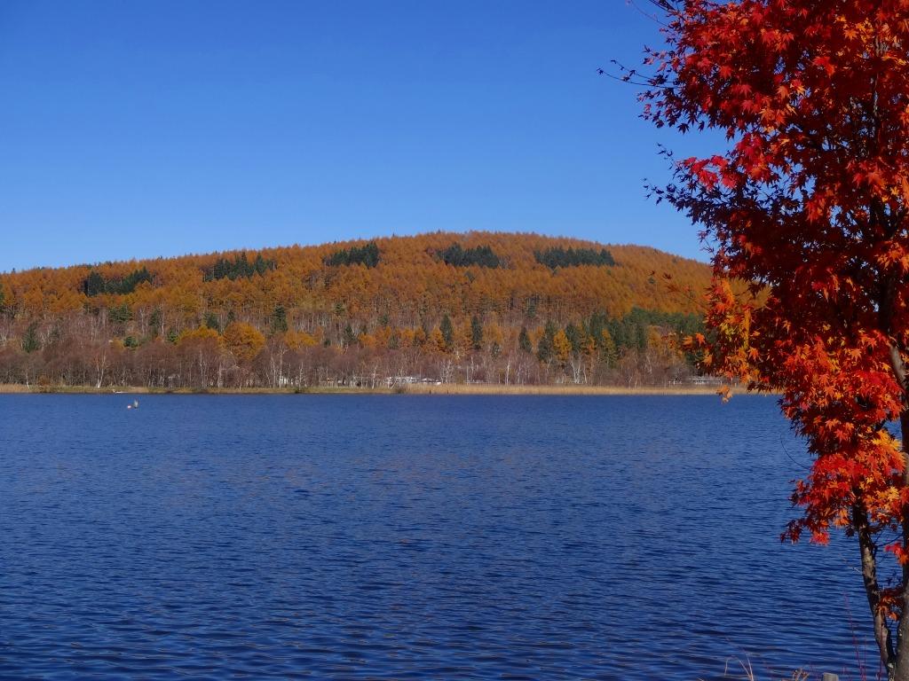 秋晴れの中 女神湖から白樺湖へ 白樺湖 蓼科 車山 長野県 の旅行