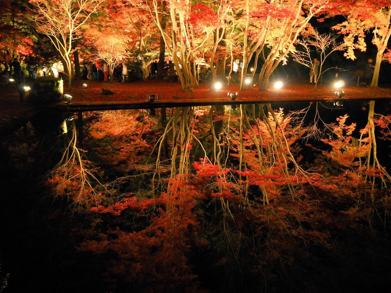 Ngắm lá đỏ ngay tại nagoya công viên Higashiyama