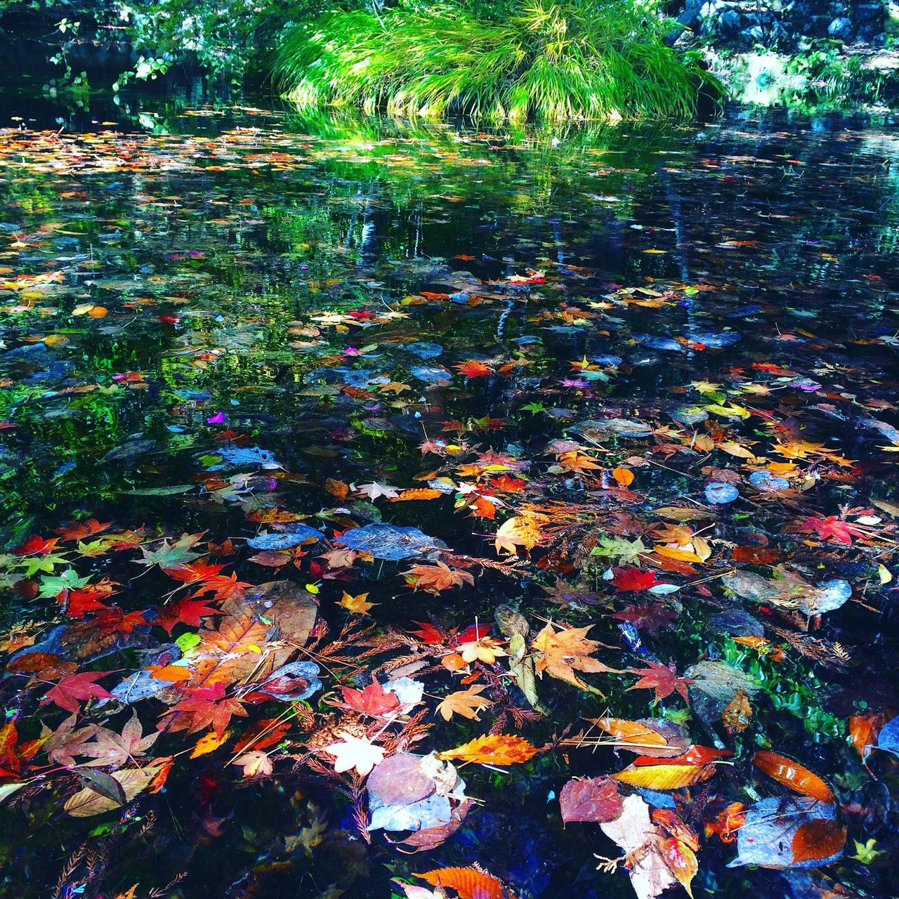 ぶらり秋の仙石原