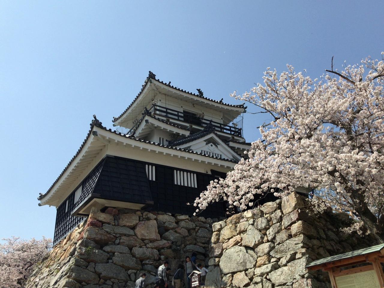 浜松城公園の桜まつり』浜松(静...