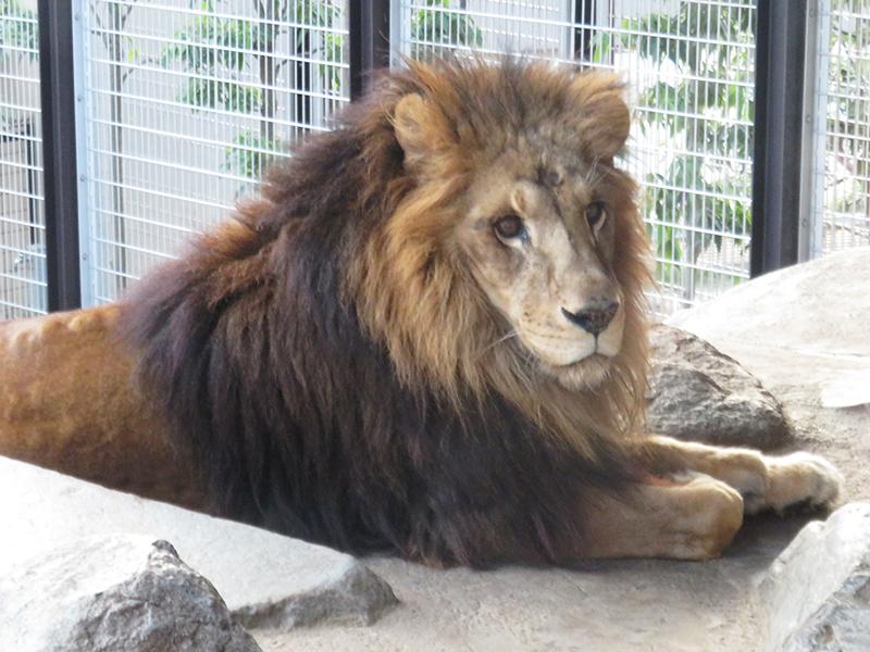 動物園 王子