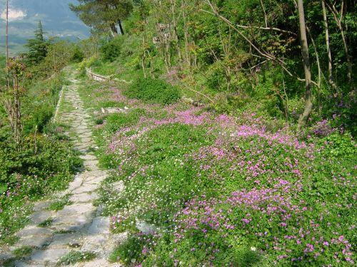 草花が咲き溢れ、ちょうど美しい季節でした。写真はギロカステラ城への小道。