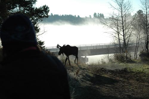 【乗馬ツアー】こちらで知り合ったhn11さんのアドバイス通り、ジャクソンレイクの辺りを巡る乗馬ツアーに行ってきました!朝靄立ち込める早朝初の極寒ツアーとなりましたが、その神秘的な風景はため息モノ!しかも、朝靄の中から、立派なムースが姿を現してくれて、本当に大満足の2時間でした♪私の乗った馬は「シェルフ」君という茶色い馬。どなたか、もし会うことがあったら宜しくお伝え下さい〜(^^)