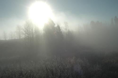 【乗馬ツアー】寒〜い早朝。朝靄の中、馬に乗って進んでいく。木々や草には白い霜が着いていて、太陽が当たると、溶けてキラキラ反射していた☆