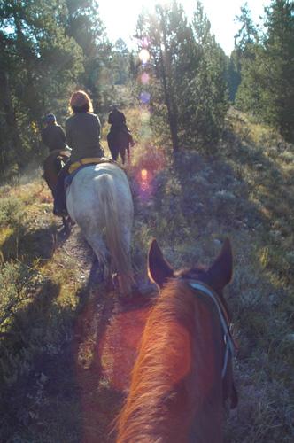 【乗馬ツアー】林の中や、オクスボーベンドを見下ろす丘、白鳥が舞う湖の畔をゆっくり、ゆっくりと進んでいく。『ロード・オブ・ザ・リング』みたい!?