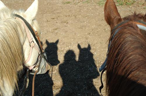 【乗馬ツアー】お世話になったシェルフ(右)の頭。正直、背中に乗っていたので彼の顔をよく覚えていない…。
