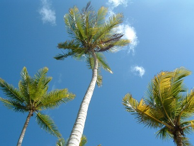 ハンモックから空を見上げるとこんな感じ。