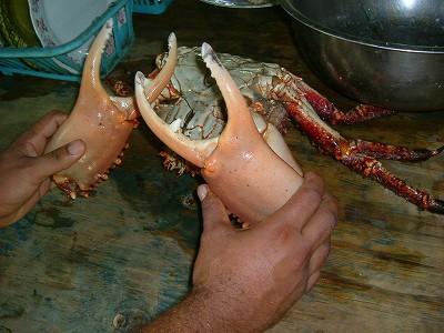 そして、私のLAS GALERASでの思い出(笑)蟹です!それも巨大蟹!こんなに大きいのに大味じゃなく、ぷりぷりでおいしかったです。<br />おまけにこの蟹、6ドルくらいでした!ああ、おいしかった。
