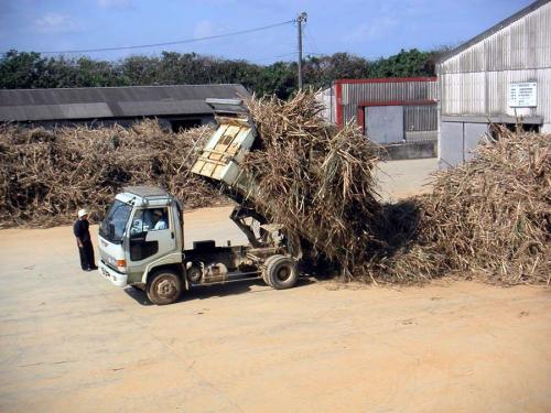 キビ刈り隊が刈ったキビを精糖工場に運んで来たトラック。<br /><br />外で体を動かして働くのが好きな人には、キビ刈り隊をお勧めします。<br />皆でわいわい単純作業をするには詰め場、個人の世界を楽しみたい人は製造かな。参考までに。