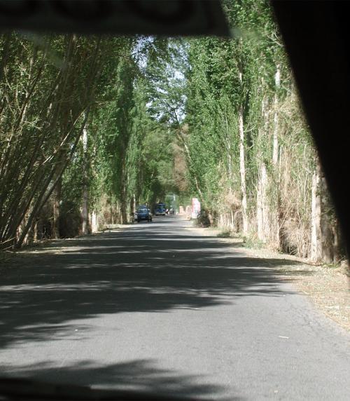 並木道。この辺りだけに茂っているので、昔の人もここに関所を設けたのでしょう。