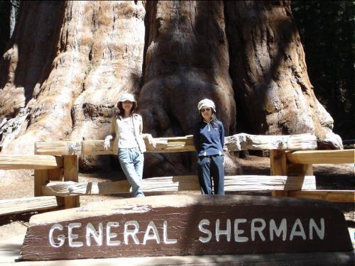 とうとうやってきました、これが世界一の巨大樹シャーマン将軍の木 デカイ! <br />樹高83.8m、根元の周囲31.3m、根元の直径11.1m、樹齢2300〜2700年 <br />日本の誇る屋久島の縄文スギと比較すると高さで3.3倍、太さで1.9倍もある <br />縄文スギの色形はほんとうに老いた木に見えるが、セコイアは年をとってる割には若く見えるというご意見でした <br />