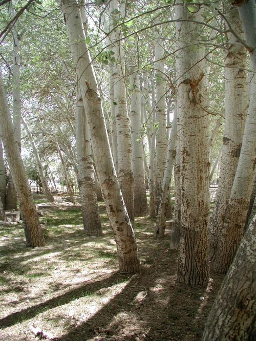 回廊脇にある雑木林。