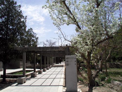 元敦煌研究院資料館前にある脇道から庭園内へ入って行く。<br />手前に見えている白い花を咲かせている桜のような木は、敦煌で有名な梨の木。<br />敦煌に限らず、西北地方では、梨はメジャーな作物の一つ。<br />