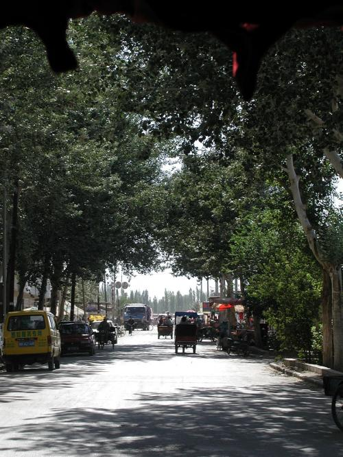 何時も通る道。<br />両側の楊樹の葉が茂っていて良い感じ。<br />