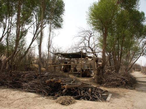 駱駝飼育場の柵。<br />