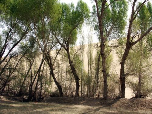 防砂林。<br />