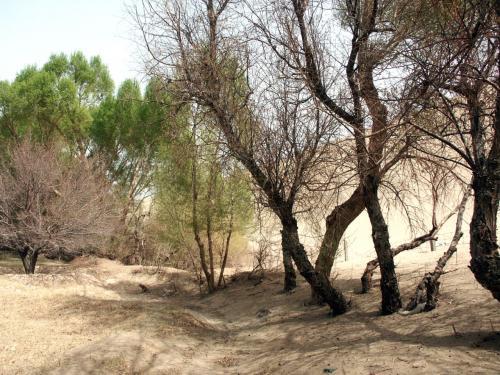 防砂林が切れると、そこには・・・<br />