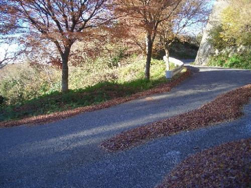 <大福山へ向かう林道><br />紅葉は散ってしまって、路上に吹き溜まっています。<br />散っていない葉っぱの色も、色あせて先っちょが枯れかかっています。