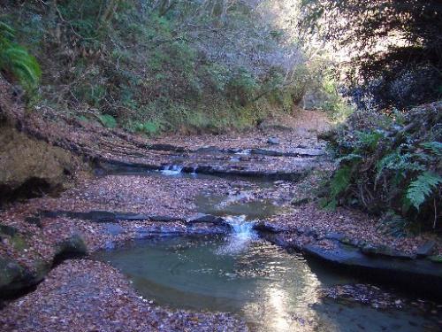 <梅ヶ瀬渓谷><br />梅ヶ瀬川の川底もこのように段になっており、美しい景観を作っています。<br />落ち葉が真っ赤だったらもっと美しいんだろうなぁ。