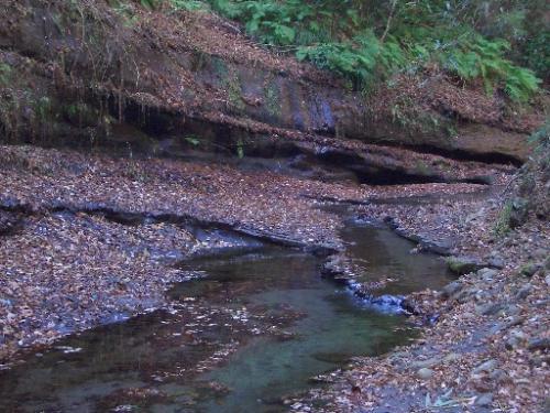 <梅ヶ瀬渓谷><br />川の側面からは水が各層から無数に滴っていますが、もっと寒くなるとこれらがすべてツララとなって、写真家が多く集まるそうです。<br />紅葉とツララの間の人の少ない時期に来れてラッキー、と自分を慰めてみる・・・。