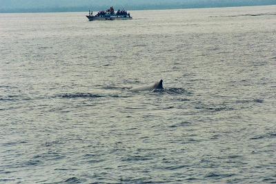 こんな感じで船から鯨を見ます