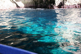 これがマルタブルーと言うか神秘的な美しい海の色・・ほんとに美しい!カプリ島の青の洞門よりも美しいと云われている・・