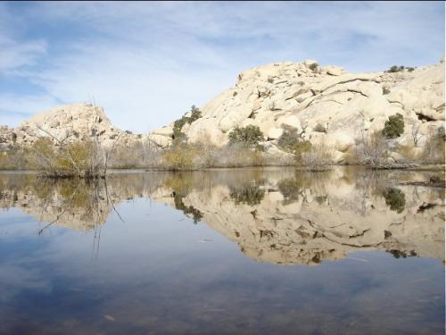 バーカーダムにて <br /><br />このダムは金鉱採掘者によって家畜の飲料水や金砂を洗う目的で作られました <br /><br />今は野生の動物達の水飲み場になっております <br /><br />
