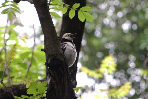 都会の真ん中に有るにも係わらず、この公園には色んな鳥が居ます。