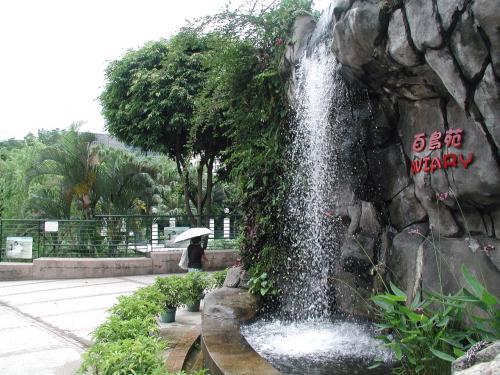 この人口の滝の上では、スズメやヒヨドリなどの小鳥たちが、<br />取っ替え引っ替え水浴びしていました。<br />鳥も、夏の香港では暑いんでしょうね。