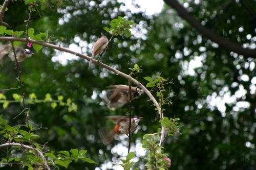 水浴をびして濡れた羽根を乾かしている小鳥たち。