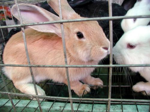 こまを見て早速反応。。。<br />ウサギの飼い主だったこま、まだ同類の匂いがするのかな?