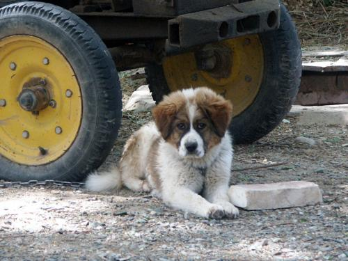 犬です。<br />別に犬くらいどうって事無いんですが、この表情が何か可笑しく、人間っぽい感じで「人面犬」って呼んでしまいました。(^^;ゞ<br /><br />犬好きのこまですから、早速近付いてみましたら、、、