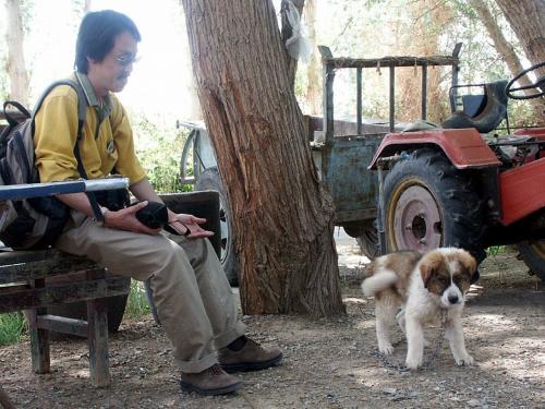 「犬好き」には2つ意味があり、こまが犬を好きなのは元より、大抵の見知らぬ犬が、こまを好いてまとわりついて来るんです。(^ω^<br /><br />ほら、コイツなんかしっぽ振りまくってるでしょ。<br />更には、跳ねてましたよ。(~~;ゞ<br />しっぽの振りが大き過ぎて、地面の砂利でスリップし、足摺リしまくっていました。(~ω~;<br />