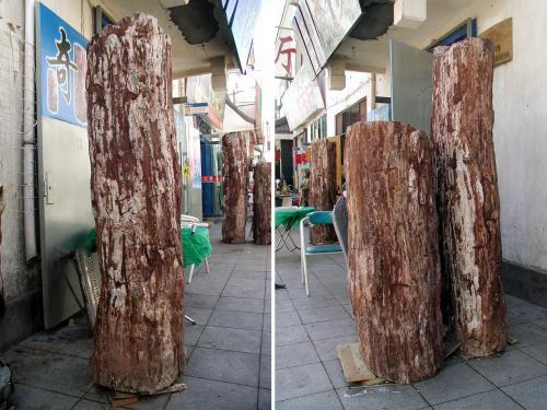 遅ればせながら、簡単に「硅化木」について語っておきましょう。<br /><br />硅化木は、1億5千年ほど前の樹木が、天変地異により地面に埋まって仕舞った物のウチ、本来腐食する筈が、火山活動などの影響を受け、木の細胞内に充填された二酸化炭素などの影響で質量変化を起こし、その中でも、砂漠地帯の乾燥した環境に有ったものだけが、長い長い年月を掛けて木の成分が石化した。<br />変化が浅い物には、まだ樹皮の質感が残っていたり、年輪が確認出来る物もある。<br />完全に石に変化した状態で硬度が高くなり、玉(ぎょく)に変化したものが価値が高いとされている。<br /><br />この2本は、王愛新老板が後日新たに仕入れたもので、一本の木が折れて3本になったもののようです。<br />一本のままでは、運搬できないでしょうね。(密猟同様、密採取ですから)