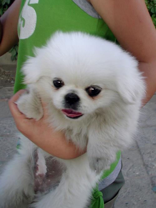 出勤途中、少女がぬいぐるみのように抱えていた犬が、とても可愛いので取らせて貰った。<br /><br />元気よく動くのでピンボケ・・・(@@;<br /><br />カメラが動きに反応できず、どこにもピントが合っていない(ーー;