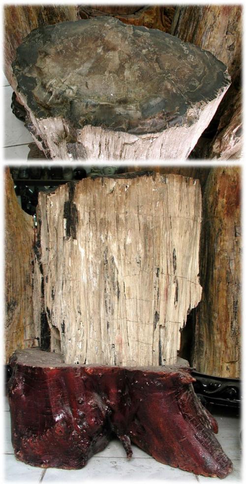 断面をしげしげ見ると、「原来這個就是樹木変成化石・・(なるほど、本来は樹木だったのが化石になったんだ・・)」と納得できます。(^^