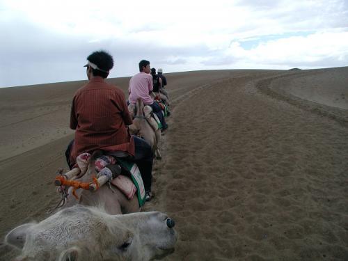 天気がどうであろうと来る人は来る。<br /><br />・・・と言う事で、早速駱駝で鳴沙山へ向かう我々。(^^;<br />先頭から、爺ぃ、侯さん、ご子息、その友人。<br /><br />